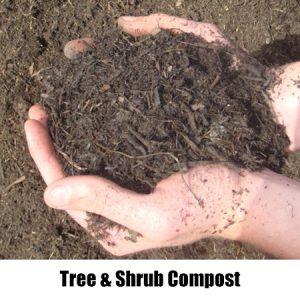 tree & shrub